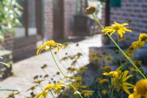 Jardines De Llanes zonas comunes-3